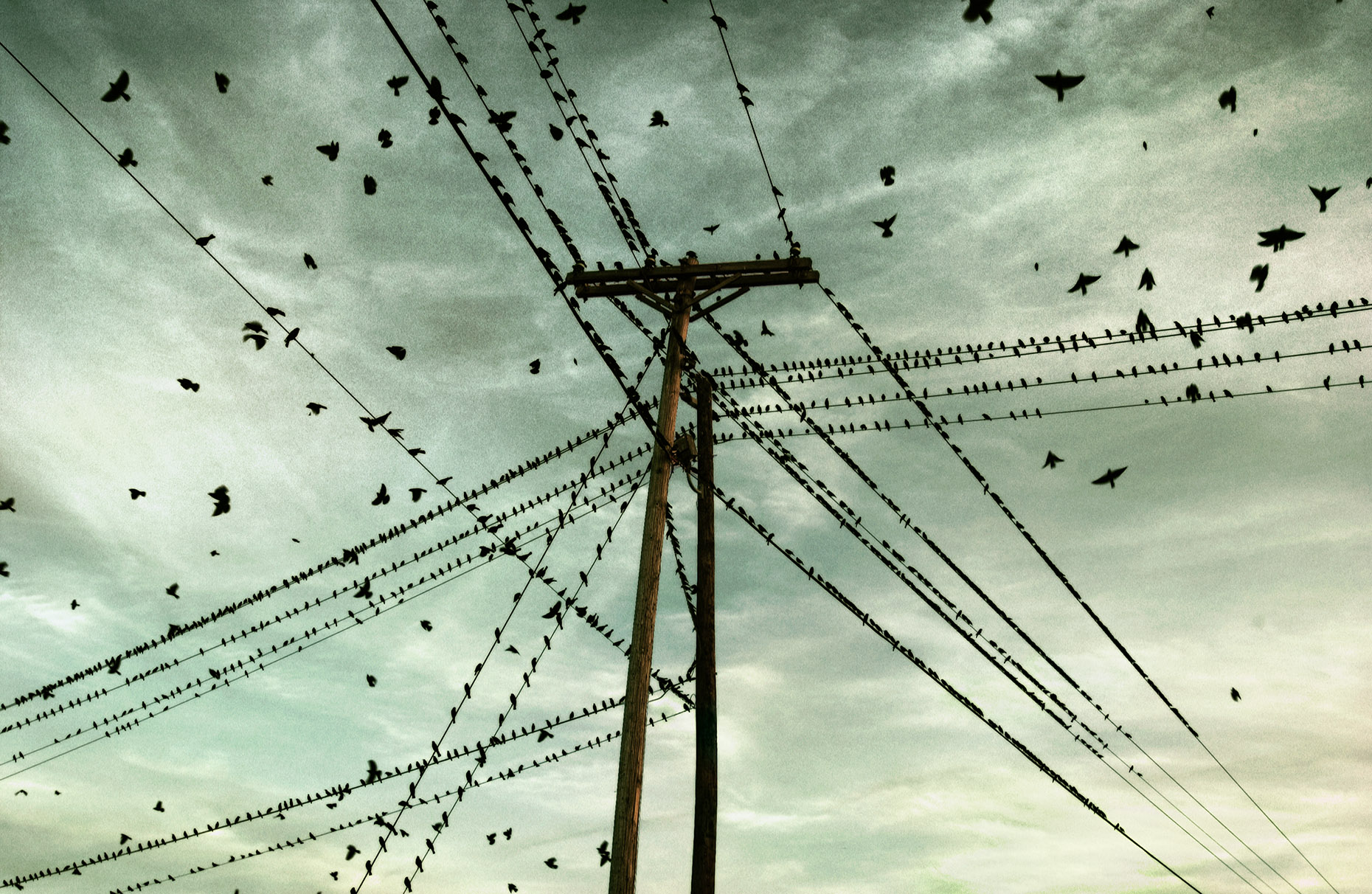 birdsonpowerlines1860